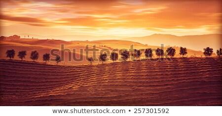 Toskana · tepeler · ev · ağaç · bahar · çim - stok fotoğraf © konstanttin