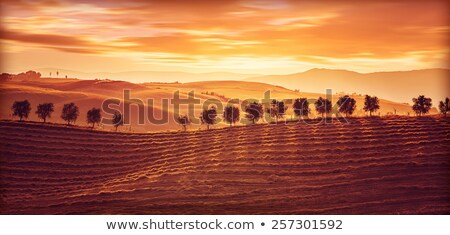 Italia paisaje puesta de sol Toscana colinas Foto stock © Konstanttin
