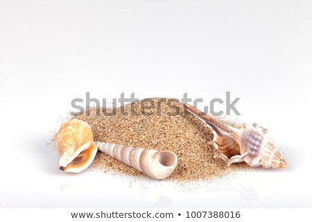 Clams and starfishes on thesea sand Stock photo © Epitavi