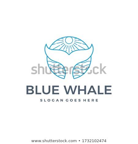 Photo stock: Baleine · queue · océan · soleil · vecteur · été