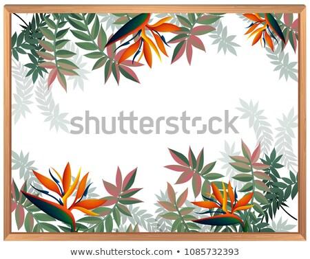 Stok fotoğraf: Cennet · kuş · çiçek · ağaç · bahar · moda