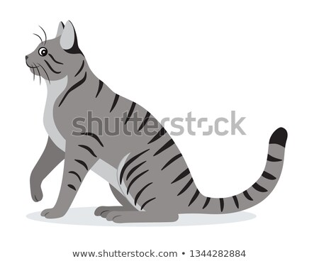 smooth coated tabby cat with long tail icon cute gray pet domestic animal vector illustration stock photo © marysan