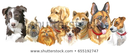 Vector illustration of different dogs breed stock photo © netkov1