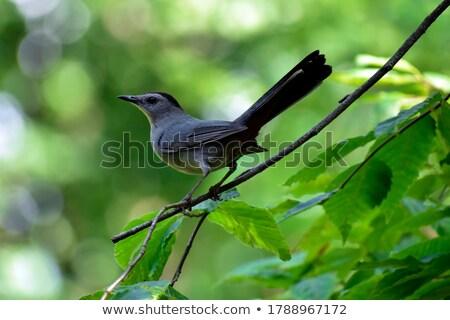 Ramo árvore pássaro Foto stock © brm1949