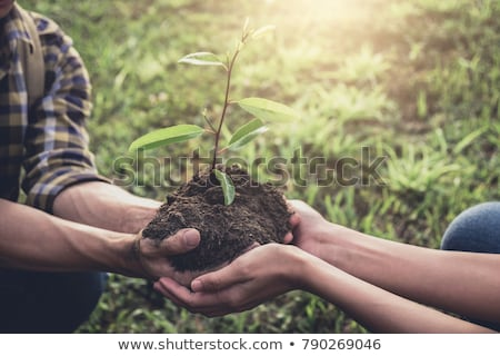 Young couple carrying a seedlings to be planted into the soil in Stock photo © Freedomz