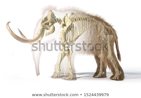 Esqueleto lado realista ilustração 3d preto animal Foto stock © Pixelchaos
