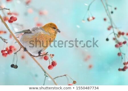 Azul amarelo pássaro sessão ramo Foto stock © Lady-Luck