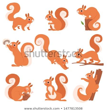 rajz · mókus · beszél · retro · rajz · aranyos - stock fotó © derocz