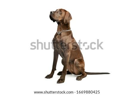 big dog stock photo © taden