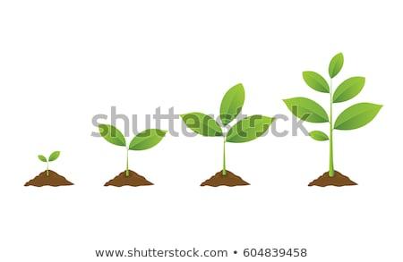 Planta tallo creciente naturaleza negro Foto stock © mady70
