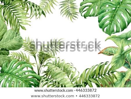 Keret fa négyszögletes erdő természet háttér Stock fotó © popaukropa