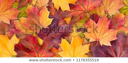 Vallen bladeren textuur boom bos Stockfoto © bobkeenan