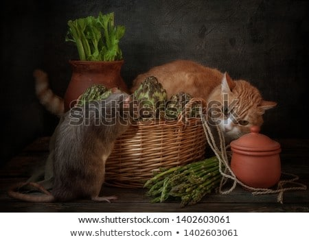 Rats and wooden signs in the garden Stock photo © colematt
