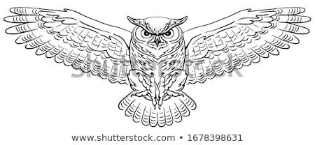 voador · coruja · pássaro · caça · animal · desenho · animado - foto stock © colematt
