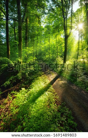 Path in sunlit forest Stock photo © elenaphoto