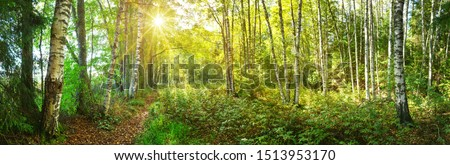 зеленый береза листьев Blue Sky дерево весны Сток-фото © RuslanOmega