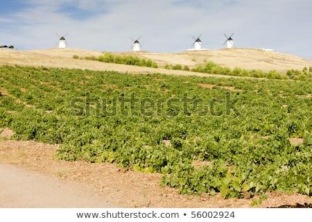 San juan Spanje landschap reizen windmolen molen Stockfoto © phbcz