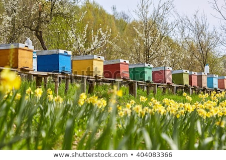 ミツバチ · 屋外 · ショット · 家 · 木材 · 夏 - ストックフォト © johny87