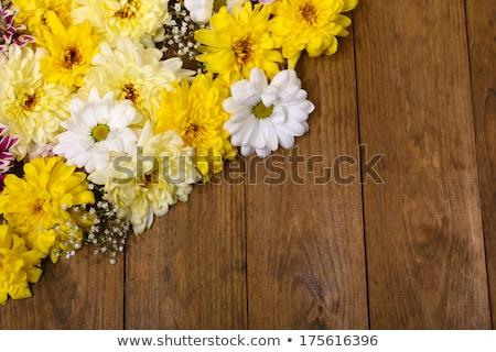 yellow chrysanthemum on wooden background Stock photo © inxti