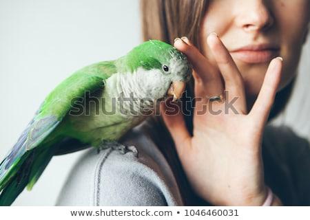 Pet Birds Stock photo © gemenacom