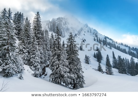 Floresta neve imagem frio dia livre Foto stock © w20er