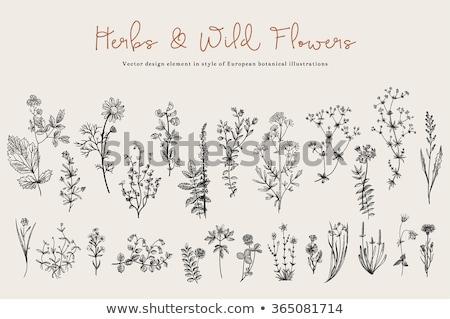 Set of black flowers Stock photo © bluering