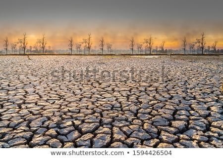 a dry land at night stock photo © bluering