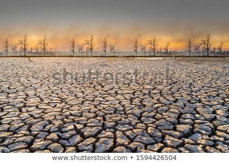 vetor · secar · terra · deserto · abstrato · fundo - foto stock © bluering