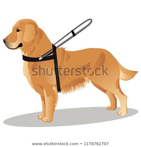 Cartoon golden retriever riem illustratie lopen mond Stockfoto © cthoman