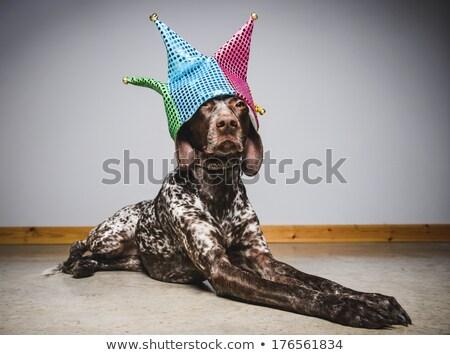 Cute dog wearing jester hat Stock photo © colematt