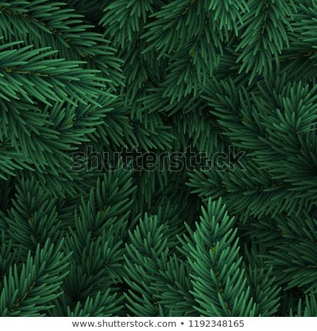 Karácsonyfa ágak fehér papír kártya jegyzet Stock fotó © Kotenko