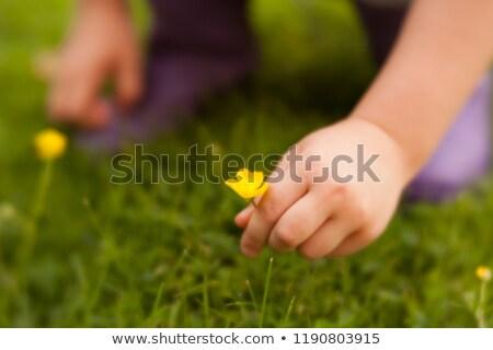 Gyerek kéz szőlőszüret vadvirágok fehér zöld fű Stock fotó © lightkeeper