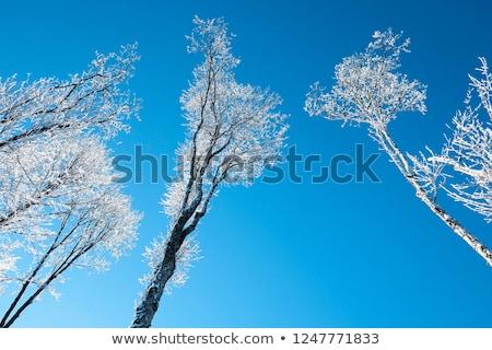 雪 · カバー · 青空 · ツリー · 風景 - ストックフォト © backyardproductions