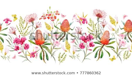 yellow oleander flower plant Stock photo © pathakdesigner