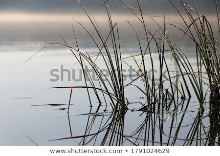 yaz · su · çim · güzellik · dalga · barış - stok fotoğraf © givaga