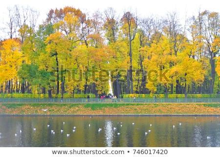 Wygaśnięcia lata ogród jesienią drogowego słońce Zdjęcia stock © Pilgrimego
