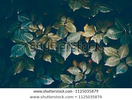 Steeg bladeren hout hartvorm Bulgarije blad Stockfoto © deyangeorgiev