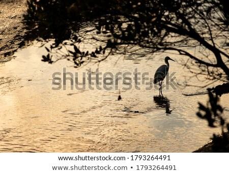 Zmierzch płytki wody piękna pomarańczowy świetle Zdjęcia stock © craig