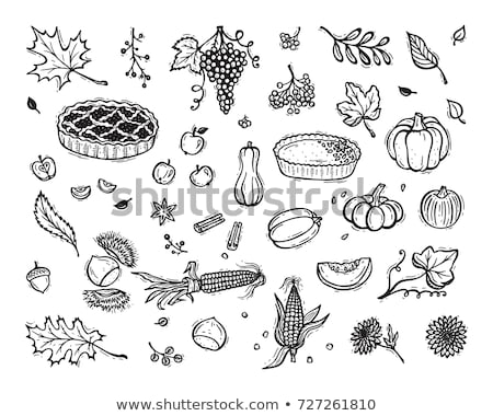 Pumpkin Vegetable and Baked Pie Icons Set Vector Stock photo © robuart