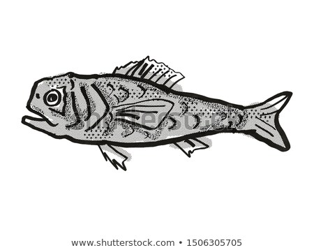 Shoulderspine Bigscale Australian Fish Cartoon Retro Drawing Stock photo © patrimonio