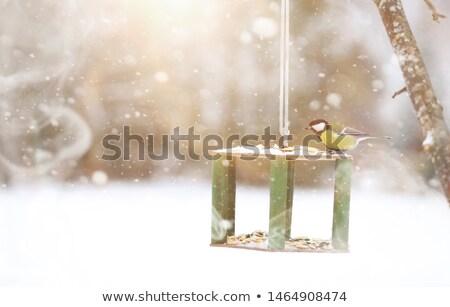 beautiful bird feeder isolated on white Stock photo © artush