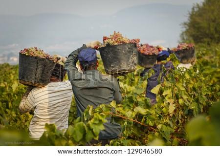 Worker in Vineyard Stock photo © tepic