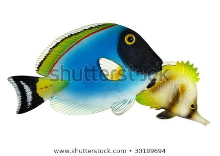 тропические · рыбы · игрушку · красочный · белый · морем · океана - Сток-фото © zhekos