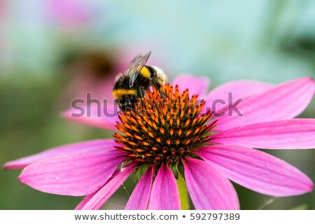 red flowers and bumblebee Stock photo © prill