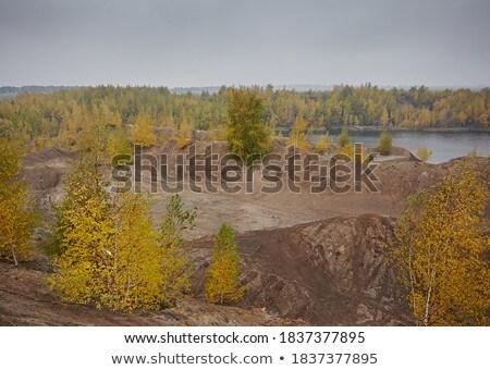 Birch on a mine dump Stock photo © njaj