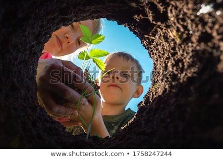 Fresa árbol joven jardín hojas secar suelo Foto stock © vavlt
