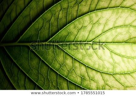 Stockfoto: Flora · abstract · blad · panoramisch · bloesem · swirl