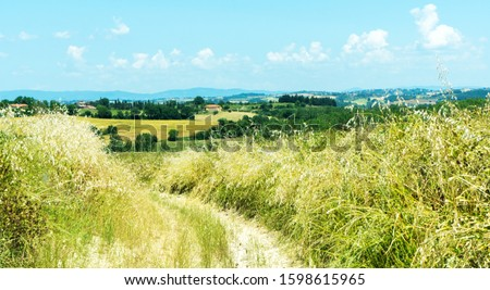 Road among hills and vineyards in spring. Stock photo © rglinsky77