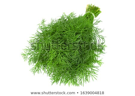 Fresh fennel Stock photo © gemenacom