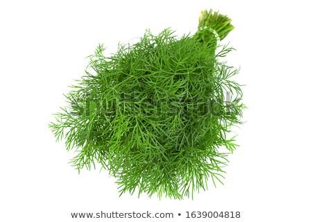 fresh fennel stock photo © gemenacom